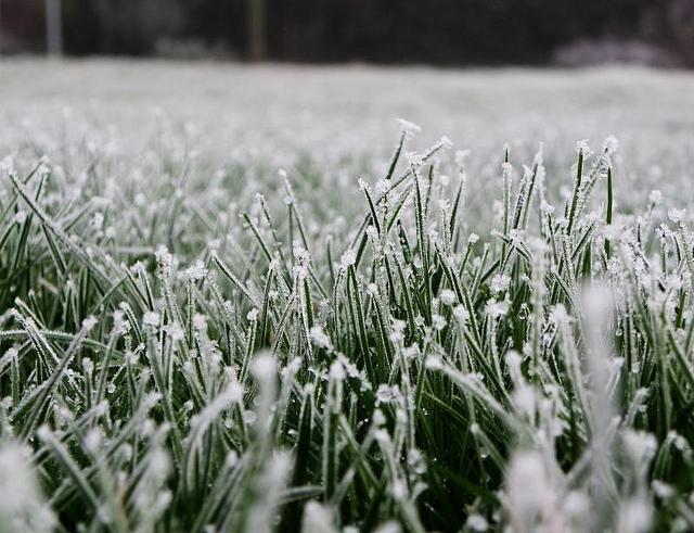 al007_frosty-grass