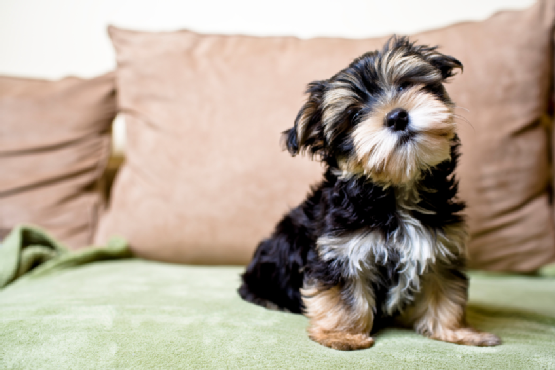 pets-in-apartments-on-northern-beaches